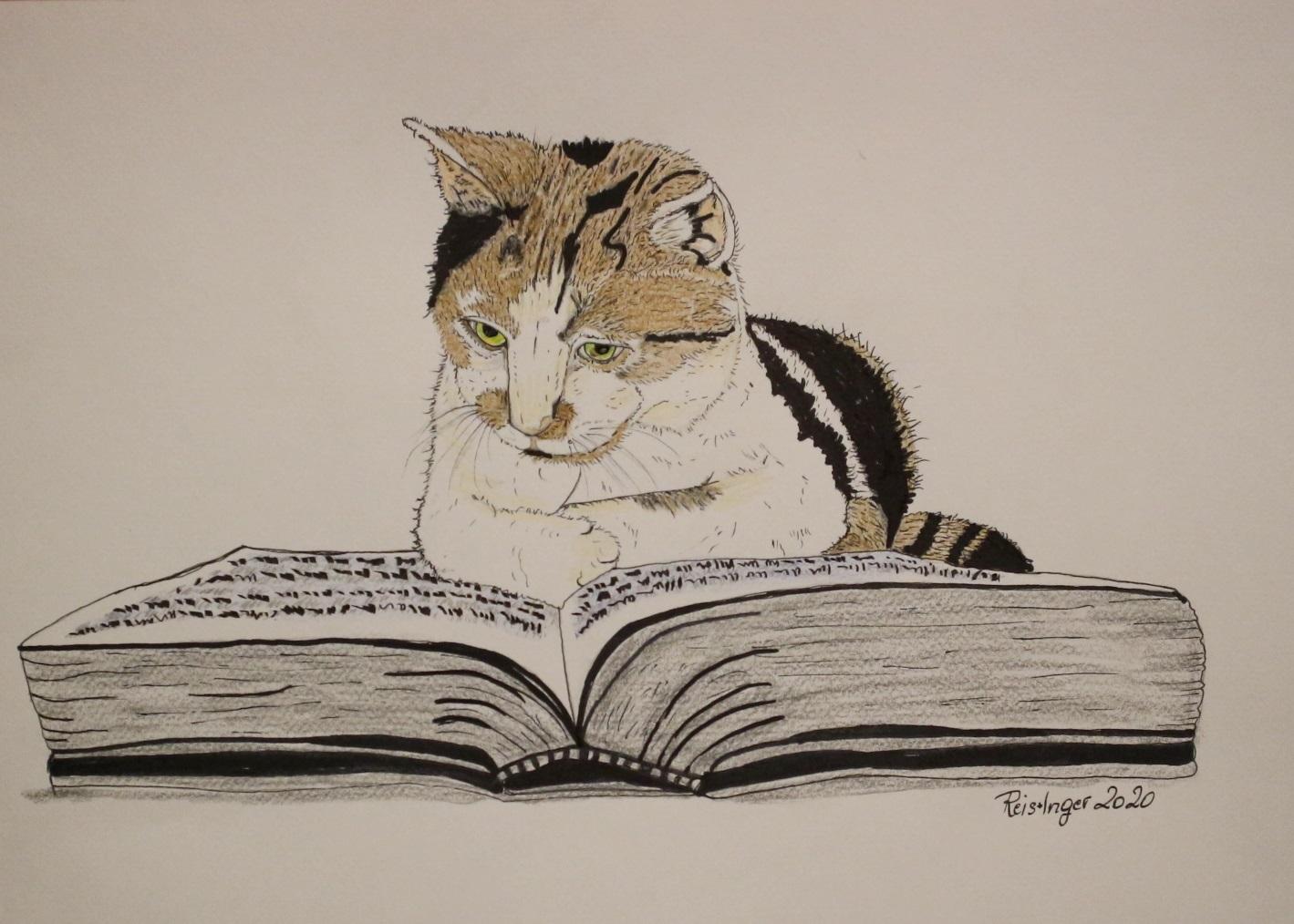 Portraite von Katzen…