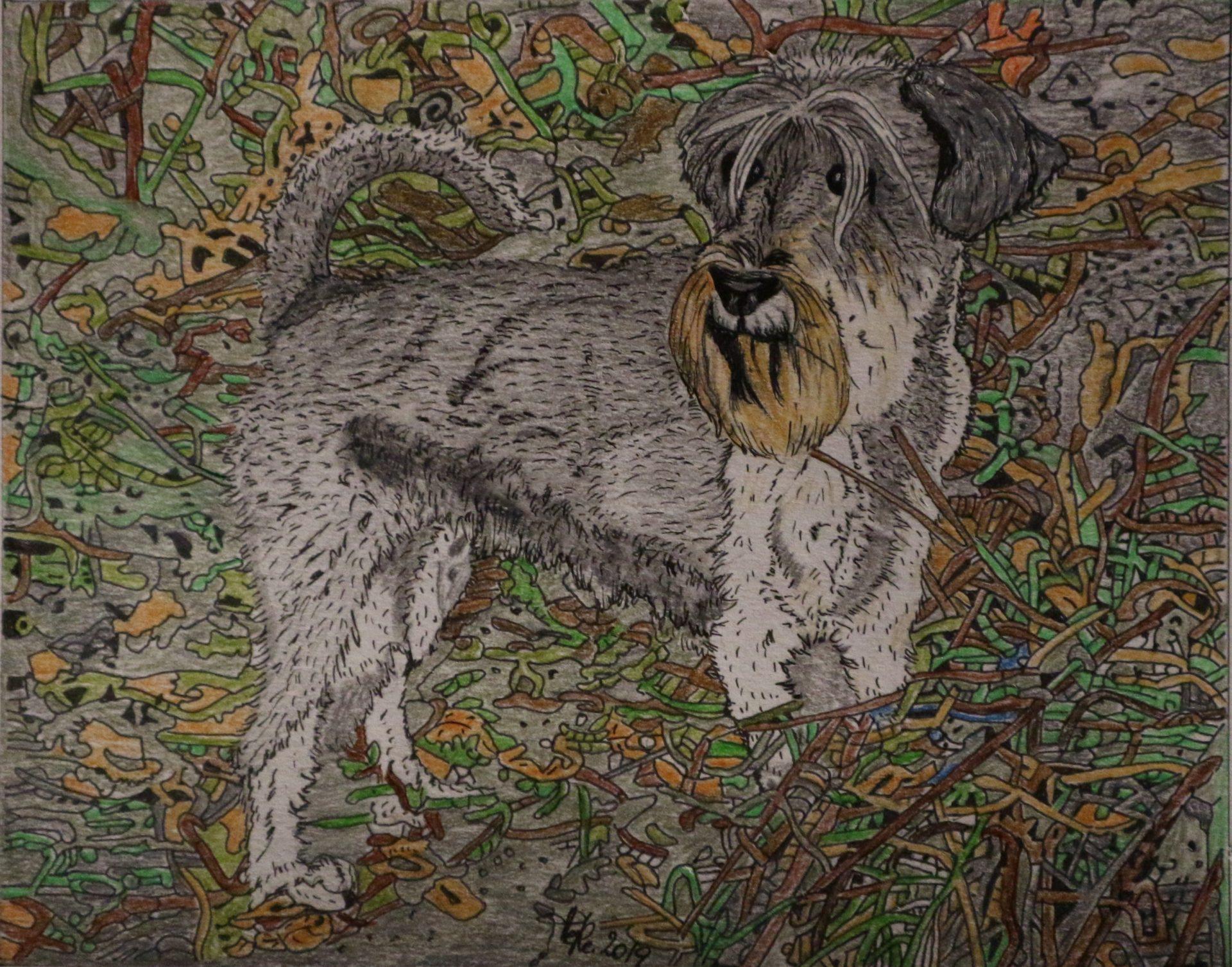 Portraits von Hunden…
